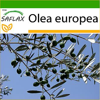 Saflax - 20 nasion - z gleby - wspólne z oliwek - Olivier - Olivo - Olivo - Ölbaum