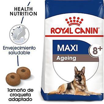 Royal Canin  Maxi Ageing 8+ Pienso Perro en Edad Avanzada de Razas Tamaño Grande