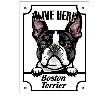 Tin Plate I stay here Boston terrier Squinting dog sign