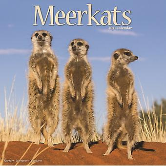 Meerkats 2021 Wall Calendar by Created by Avonside Publishing Ltd