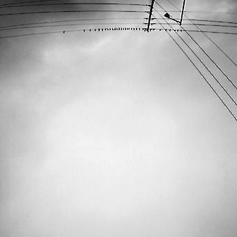 Margjeka Armand - Hummingbird [CD] USA import