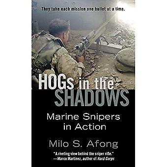 Schweine in den Schatten: Marine Scharfschützen in Aktion