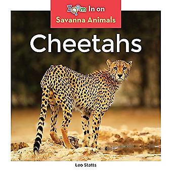 Gepardit (savanni eläimet)