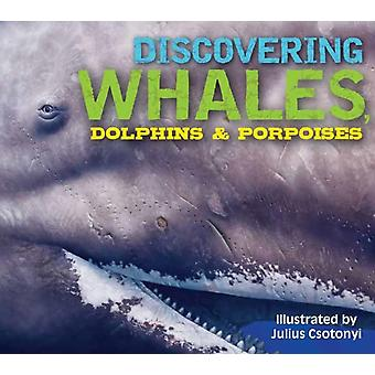 Discovering Whales Dolphins and Porpoises by Gauthier & Kelly