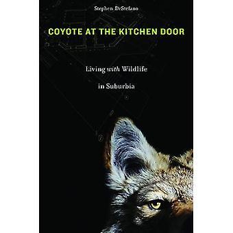Kojote an der Küchentür: Leben mit Wildtieren in Suburbia