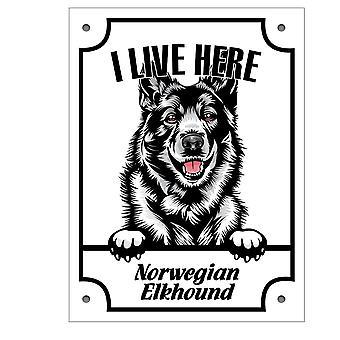 Tablă norvegiană elkhundKikande câine semn