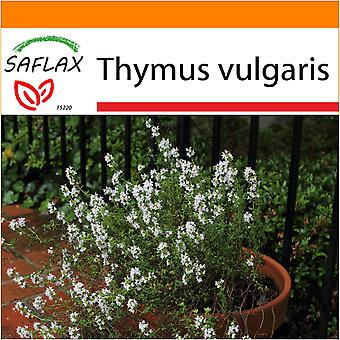 Saflax - Garden in the Bag - 200 seeds - Common Thyme - Thym commun - Timo comune - Tomillo - Echter Thymian