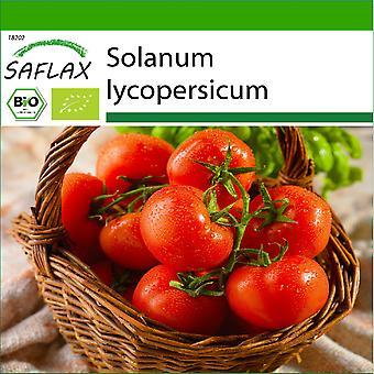 Saflax - 10 frø - Med jord - Organisk - Tomat - Berner Rose - BIO - Tomate - Rose de Berne - BIO - Pomodoro - Rosa di Berna - Ecológico - Tomate - Rosa de Berna - BIO - Tomate - Berner Rose