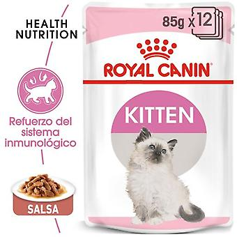 Royal Canin Kitten Wet Food in Sauce for Kittens (Cats , Cat Food , Wet Food)