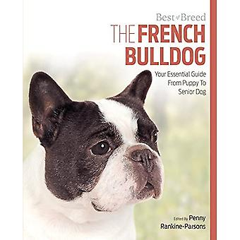 French Bulldog Best of Breed