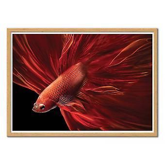 Art-Poster - Red fir Bettafish - Antonyus Bunjamin