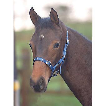 Cottage Craft TEX Nylon Foal Headcollar