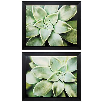 """23"""" X 19"""" Black Frame Spring Succulent (Set of 2)"""