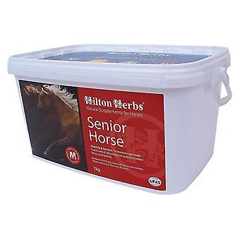 Hilton urter Senior hest