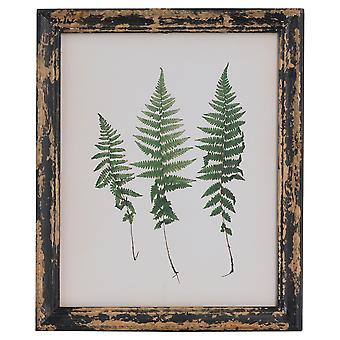 Hill Interiors Rustic Framed Botanical Triple Fern Picture
