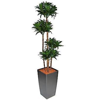Draceana Fragrans artificiale 145cm