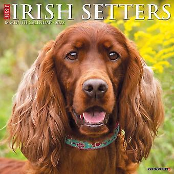 Just Irish Setters 2022 Wall Calendar Dog Breeds by Willow Creek Press