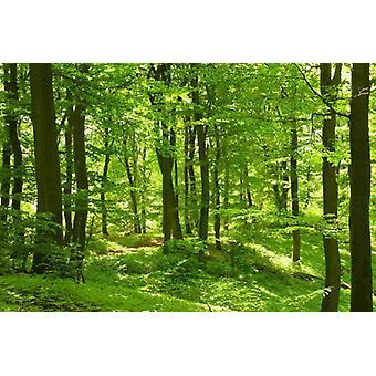 Tapete Mural Forest im Frühling