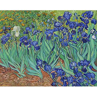 Irises, Vincent Van Gogh  Art Reproduction.impressionism Style Modern Hd Art Print Poster,canvas Prints Wall Art For Office Home Decor Pictures