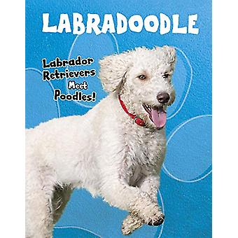 Labradoodle - Labrador Retrievers Meet Poodles! by Sue Bradford Edward