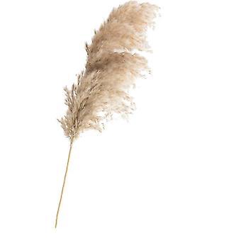 Tørret Pampas Grass Decor Wedding Flower Bunch naturlige planter til hjemmet