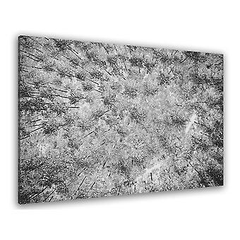 Wykres śniegu na sosnach