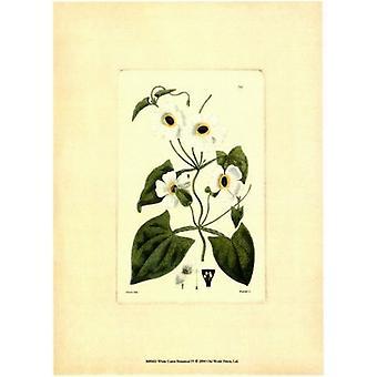 White Curtis Botanical IV Poster Print by Vision studio (6 x 8)