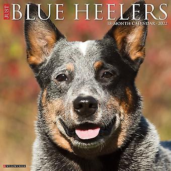 Just Blue Heelers 2022 Wall Calendar Dog Breed by Willow Creek Press