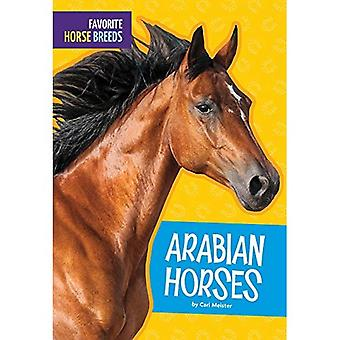 Arabian Horses (Favorite Horse Breeds)