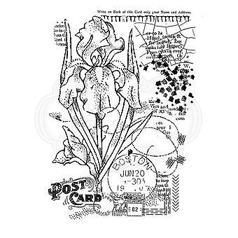 Houtwerk Clear Singles - Vintage Iris