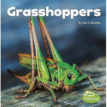 Grasshoppers (Little Critters) by Lisa J Amstutz - 9781515778370 Book
