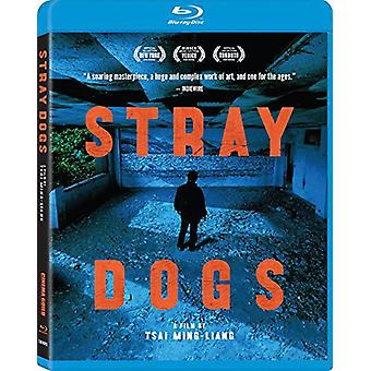 Stray Dogs [BLU-RAY] USA import