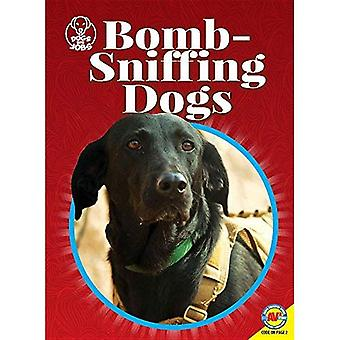 Bom snuivende honden (honden met banen)