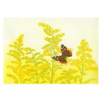 Maurice Bebb Goldenrod and Red Admiral Boxed Small Notecards by Illustrated by Maurice R Bebb