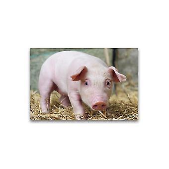 New Born Adorable Knorretje Poster -Afbeelding door Shutterstock