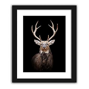 Picture In Black Frame, Deer