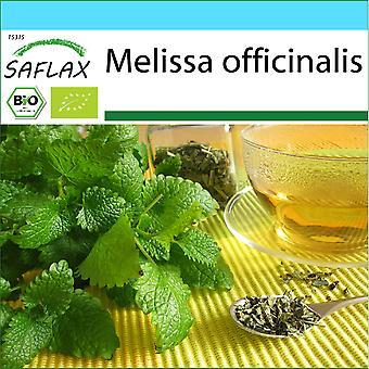 Saflax - Geschenkset - 1000 Samen - Bio - Zitronenmelisse - BIO - Mélisse officinale - BIO - Melissa - Ecol'gico - Melisa - BIO - Zitronenmelisse