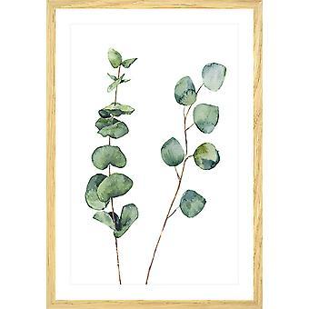 Poster natuur aquarel eucalyptus blad