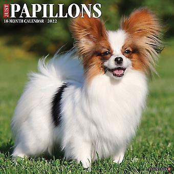 Bara Papillons 2022 Wall Calendar Dog Breed av Willow Creek Press