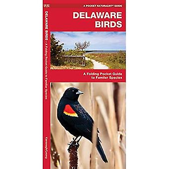 Delaware Birds: An Introduction to Familiar Species