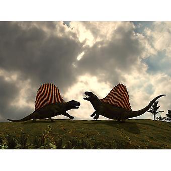 Dimetrodon lutte au-dessus du territoire Poster Print