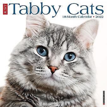 Bara Tabby Cats 2022 Wall Calendar Cat Breed av Willow Creek Press