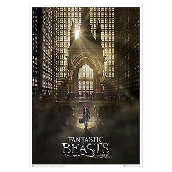 Poster - Fantastic Beasts - Art Print Magical Congress 27x40
