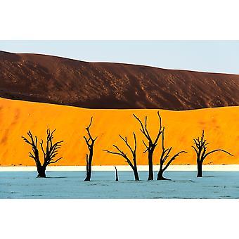 Árboles muertos en el desierto Dead Vlei Sossusvlei desierto de Namib Namib-Naukluft Parque Nacional Namibia cartel imprimir imágenes panorámicas (36 x 24)