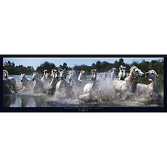 Horses in the Camargue France Poster Print by Steve Bloom (38 x 13)