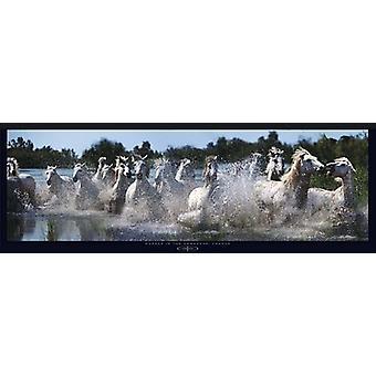 Hester i Camargue Frankrike Poster trykk av Steve Bloom (38 x 13)