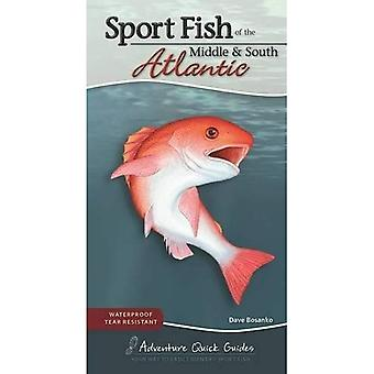 Sport Fish of the Middle & South Atlantic: Including� Delaware, Florida, Georgia,� Maryland, North Carolina, South Carolina and Virginia� (Adventure Quick Guides)