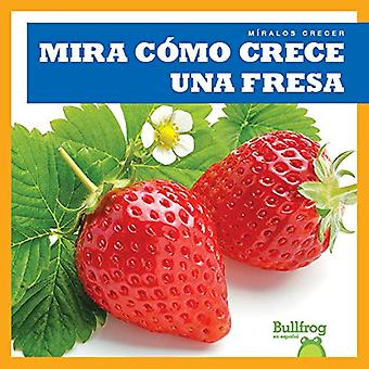 Mira Como Crece Una Fresa (Watch a Strawberry Grow) (Miralos Crecer (Watch It Grow))