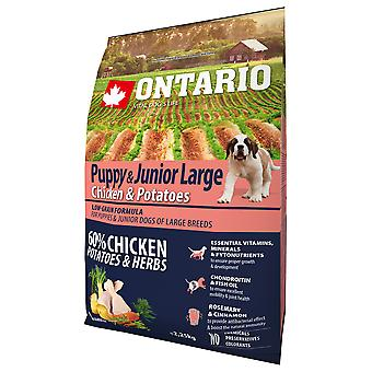 Ontario Puppy and Junior Large Chicken and Potatoes (Dogs , Dog Food , Dry Food)