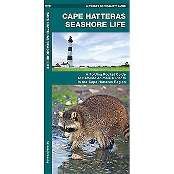 Cape Hatteras Seashore Life: An Introduction to Familiar Plants and Animals in the Cape Hatteras Region